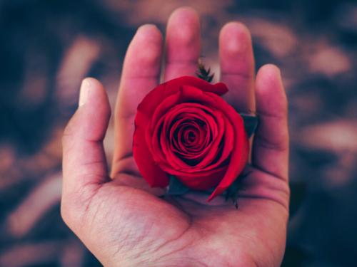Роза в ладони