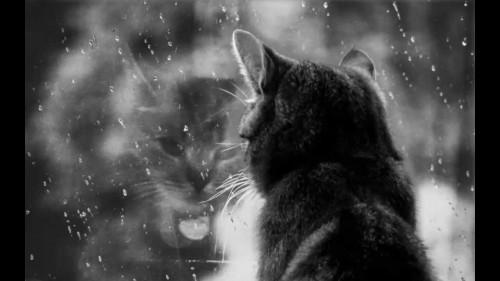 Грустная кошка смотрит в окно