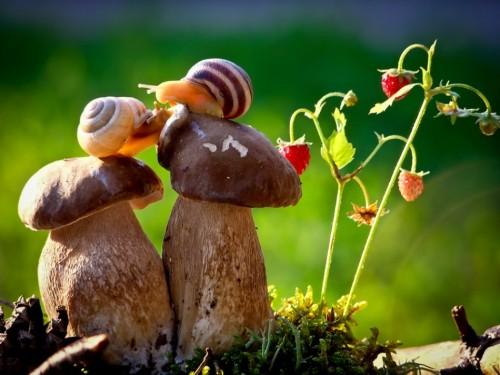 Две улитки на грибах