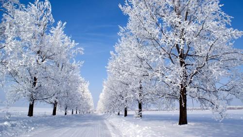 Деревья в снегу вдоль дороги