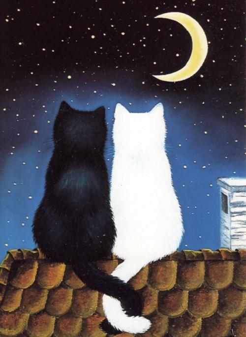 Кот и кошка сидят рядом на крыше
