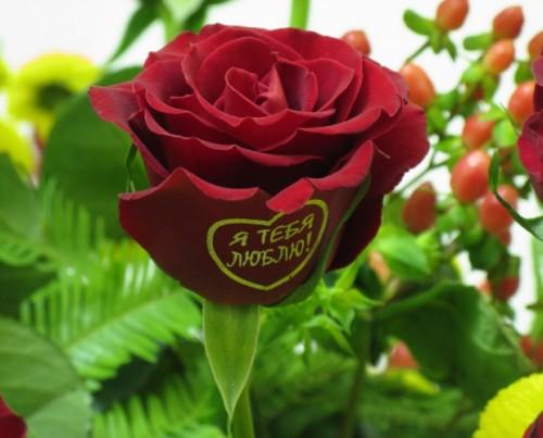 Признание, написанное на лепестке розы