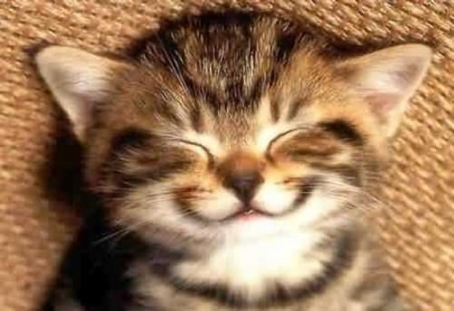 Котенок радуется