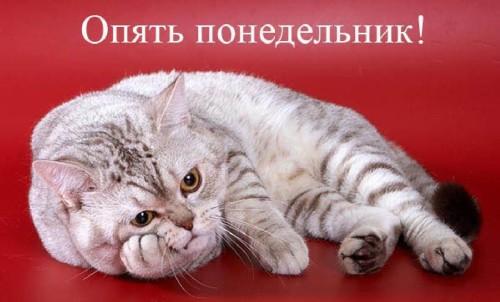 Кот лежит, положив голову на лапу