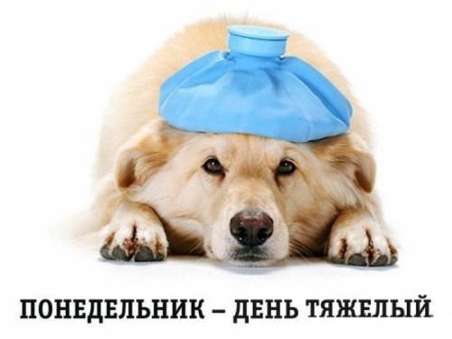 Грелка на голове у собаки