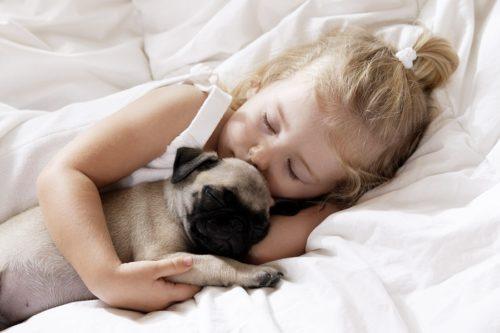 Девочка спит, обнимая мопса