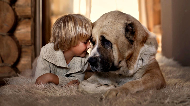 Большая собака и маленький ребенок