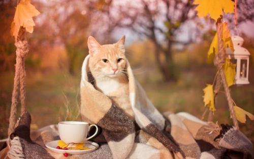Кот в пледе осенью