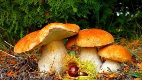 «Осень – это сны листопада»: подборка цитат и высказываний о золотом времени года