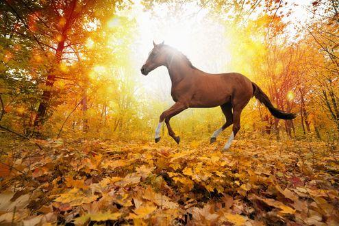 Лошадь осенью