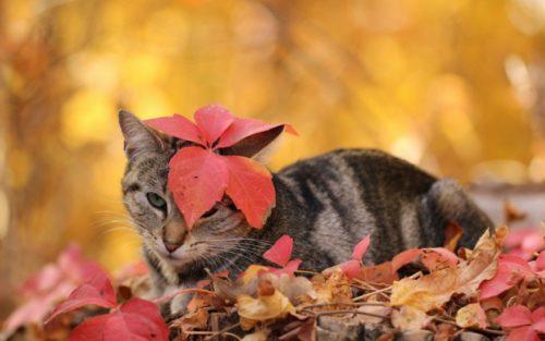 Осенние листья краснеют