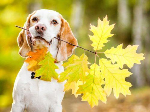Пёс с листьями