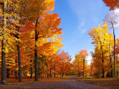 Голубое небо в октябре