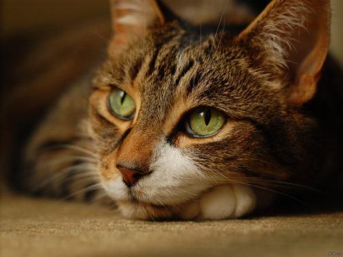 О чём думают коты