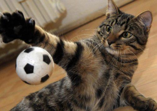 Кот играет в мячик
