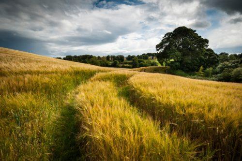 Плодородное поле