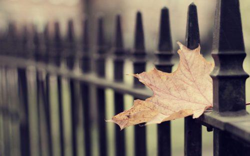 Осенний лит между прутьев ограды