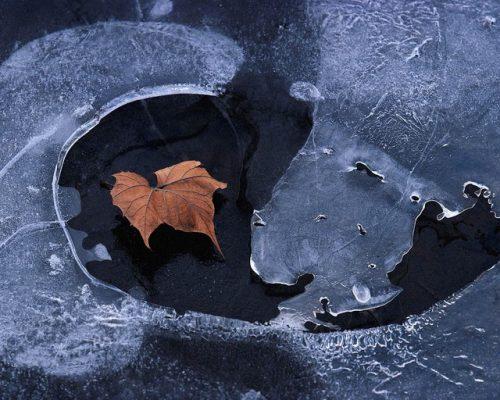 Лист в луже со льдом