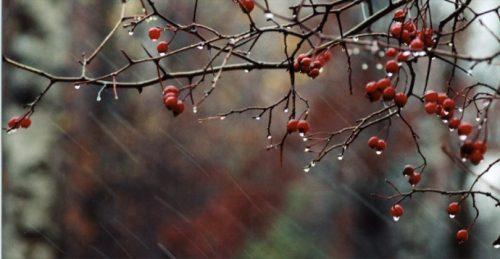 Дождь в ноябре