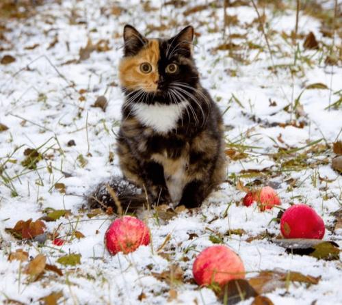 Для хорошего кота и ноябрь — март